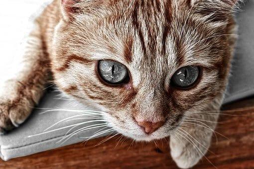 ilustrativní fotka kočky