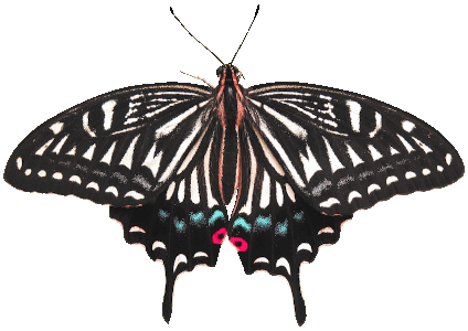 fotka motýla s průhledným pozadím